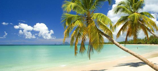 La Toussaint sous les cocotiers
