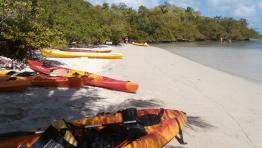 Islands on Kayak - Iguana Tour