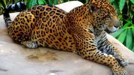 Martinique Zoo - Le Carbet